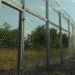 De teama pestei porcine africane și pentru a-și proteja industria cărnii de porc, Danemarca construiește un gard la granița cu Germania